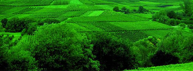 Fünfschilling Weingarten