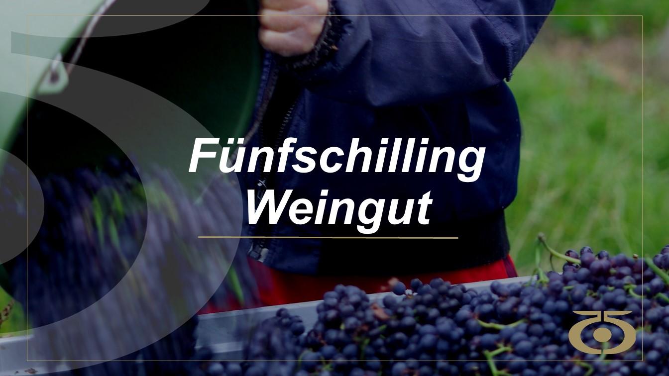 Weingut Trauben Website
